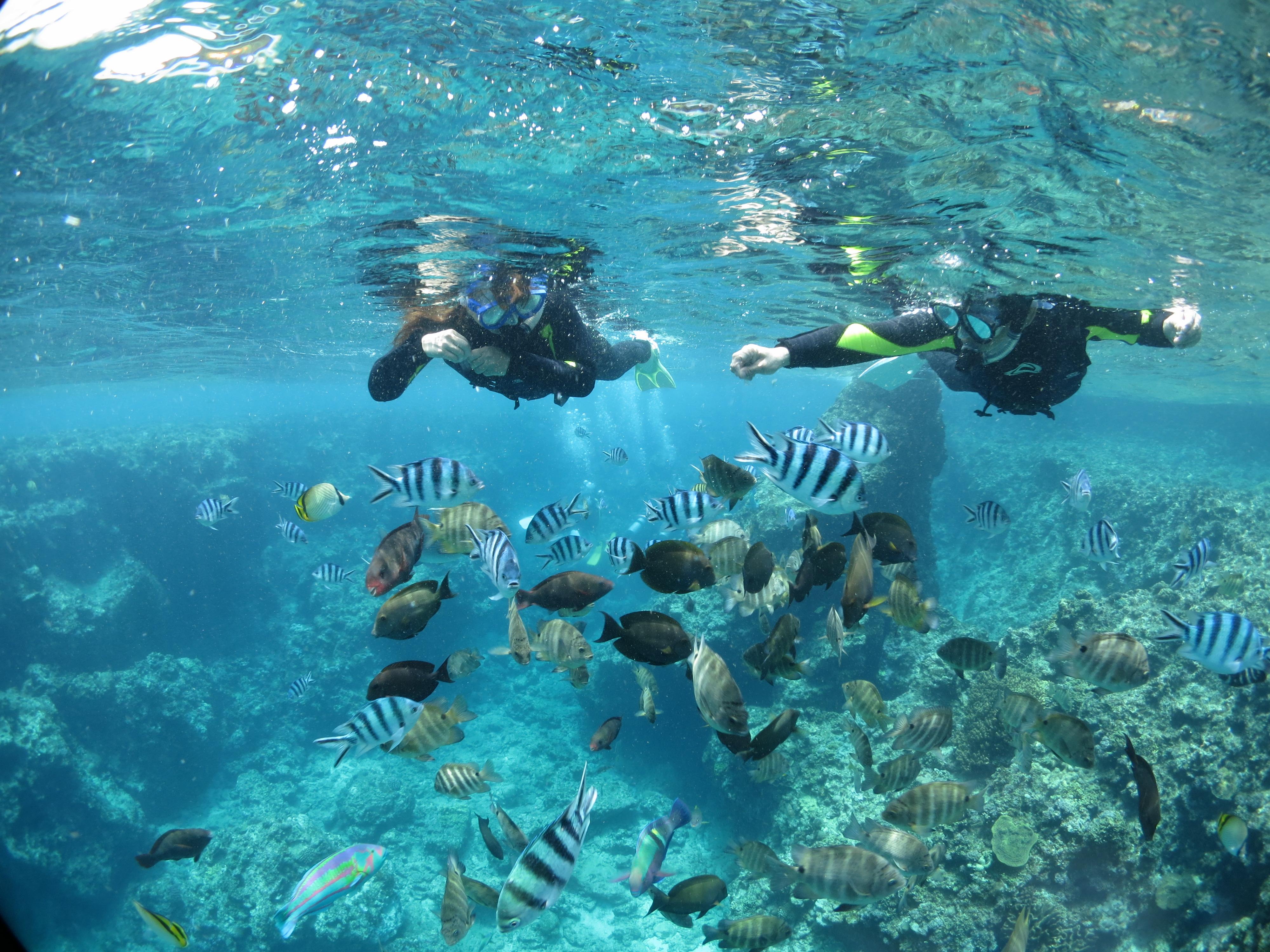 沖縄の青の洞窟の体験ダイビングツアーででお魚に餌付け