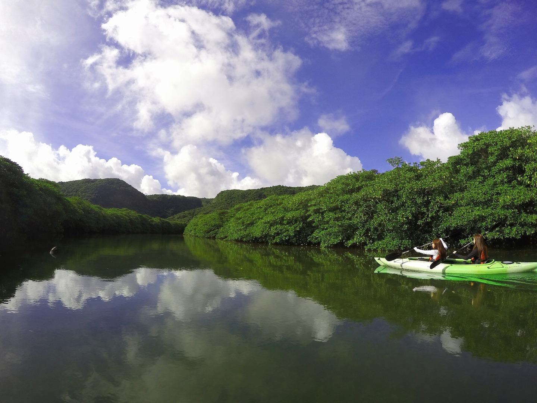 西表島のマングローブカヌー体験